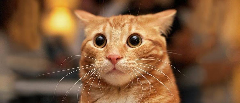 10 главных кошачьих страхов