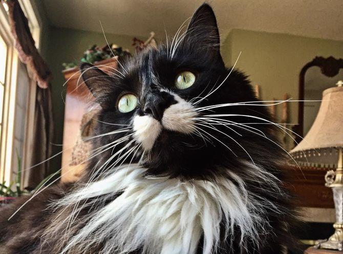 Що це означає: ТОП-25 цікавих фактів про котячу поведінку 3