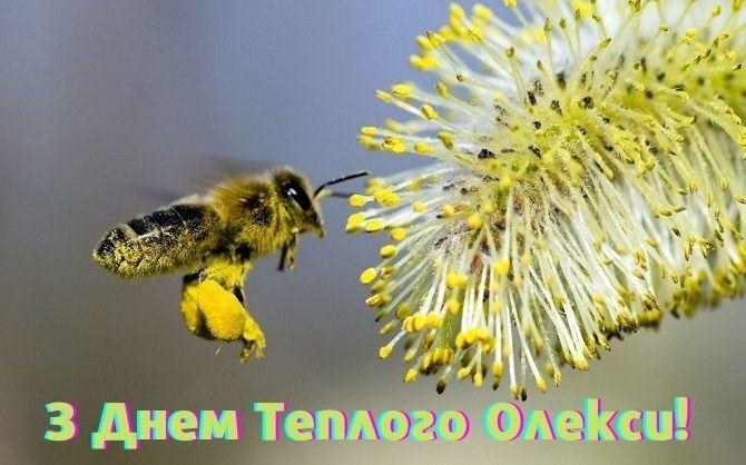 Теплий Олекса 2021: красиві привітання зі святом 3
