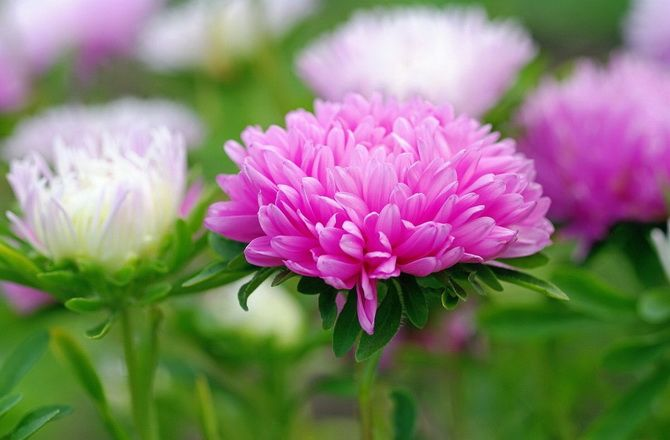 Квітковий гороскоп по даті народження: дізнайтеся, яка ви квітка 8