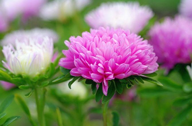 Цветочный гороскоп по дате рождения: узнайте, какой вы цветок 7