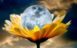 Полнолуние в мае 2021: Цветочная Луна и Суперлуние