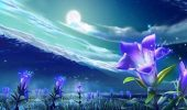 Квітковий гороскоп по даті народження: дізнайтеся, яка ви квітка