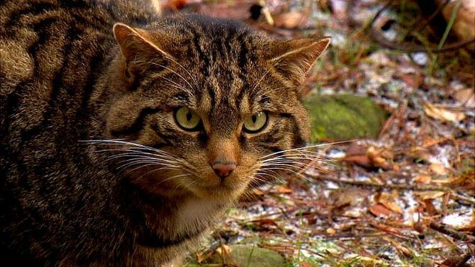 Коты – законченные эгоисты. Правда или клевета? 6