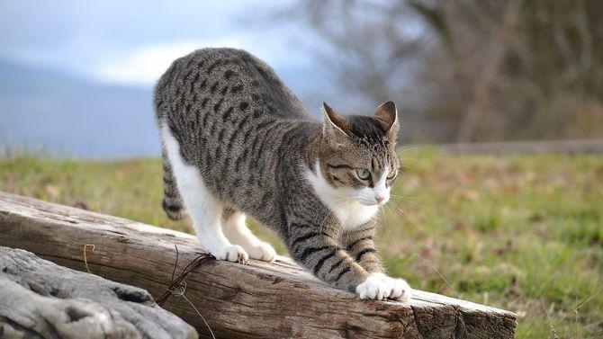Коты – законченные эгоисты. Правда или клевета? 7