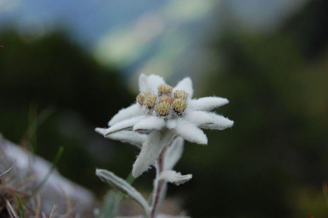 Квітковий гороскоп по даті народження: дізнайтеся, яка ви квітка 12