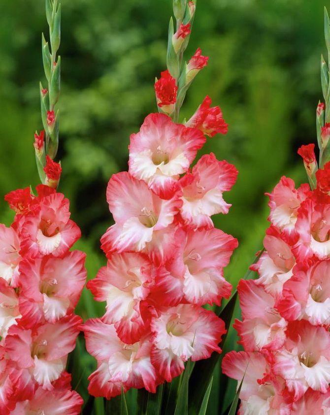 Цветочный гороскоп по дате рождения: узнайте, какой вы цветок 10