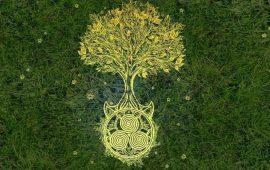 Гороскоп друидов: какое вы дерево в кельтской астрологии