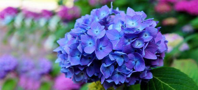 Квітковий гороскоп по даті народження: дізнайтеся, яка ви квітка 4