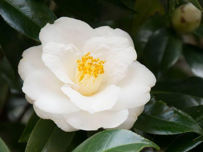 Квітковий гороскоп по даті народження: дізнайтеся, яка ви квітка 9