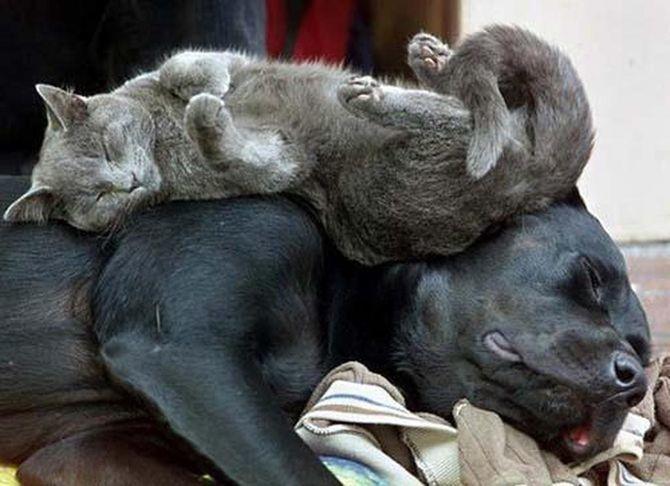 Коты – законченные эгоисты. Правда или клевета? 5