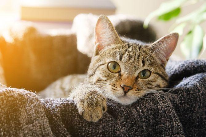 Коты – законченные эгоисты. Правда или клевета? 8