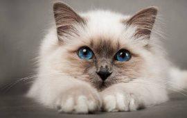 Коти – закінчені егоїсти. Правда чи наклеп?