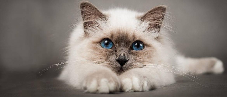 Коты – законченные эгоисты. Правда или клевета?