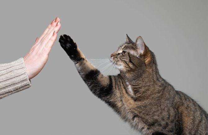 Коты – законченные эгоисты. Правда или клевета? 13