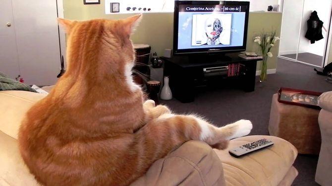Коты – законченные эгоисты. Правда или клевета? 1