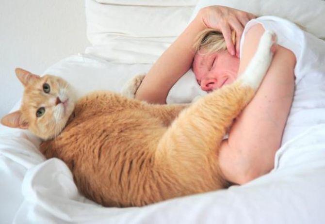 Коты – законченные эгоисты. Правда или клевета? 4