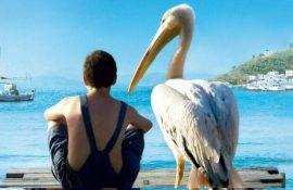 Фильмы про птиц — топ-5 лучших картин с пернатыми