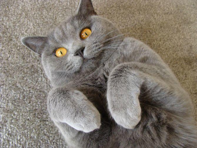 Правда ли, что коты умеют улыбаться? 4