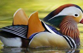 10 найкрасивіших птахів планети