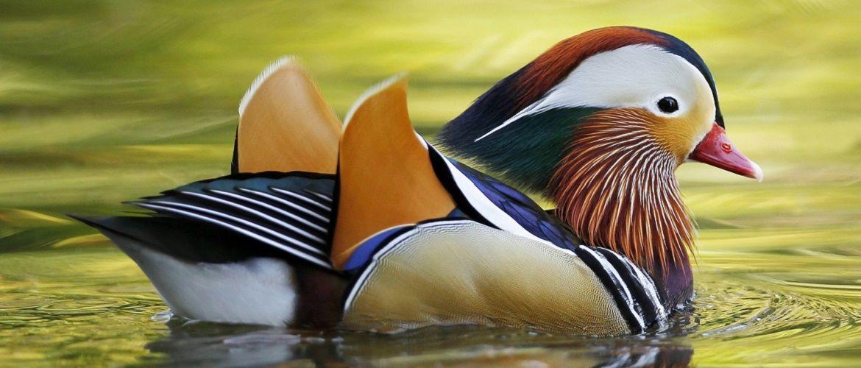 10 самых красивых птиц планеты