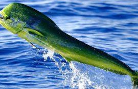 10 видів риби, яку краще не їсти