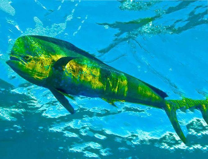 10 видів риби, яку краще не їсти 3