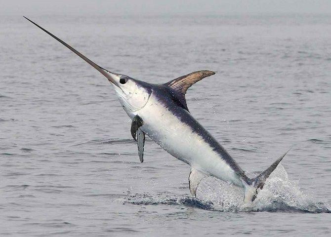 10 видів риби, яку краще не їсти 6