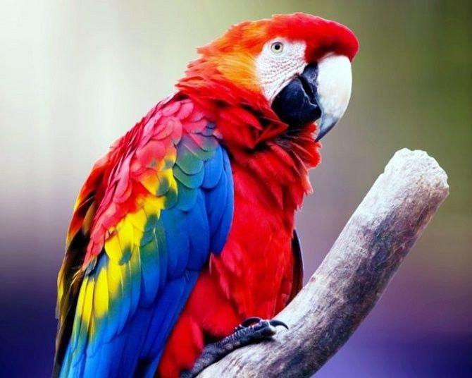 10 самых красивых птиц планеты 3