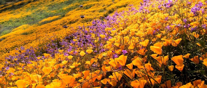 Цвета 2021: эксперты назвали главные оттенки лета и грядущего сезона