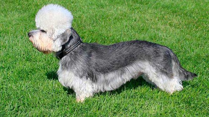 5 самых  редких пород собак на планете 4