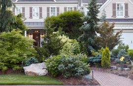 Хвойные деревья в ландшафтном дизайне дома