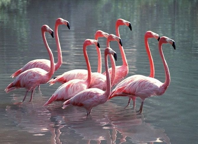 10 самых красивых птиц планеты 9