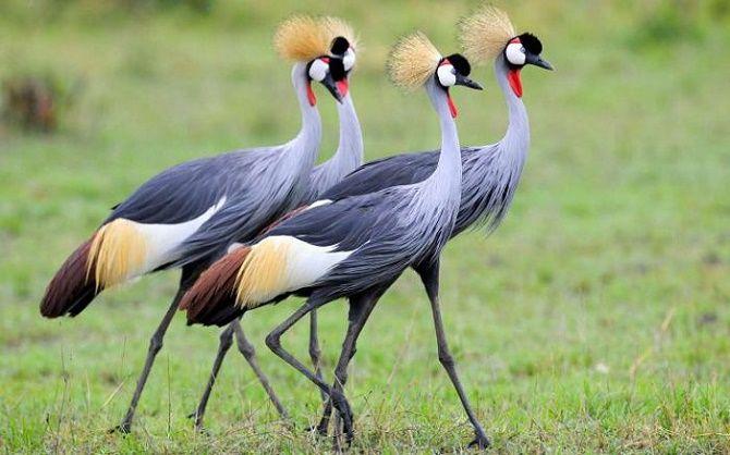 10 самых красивых птиц планеты 6