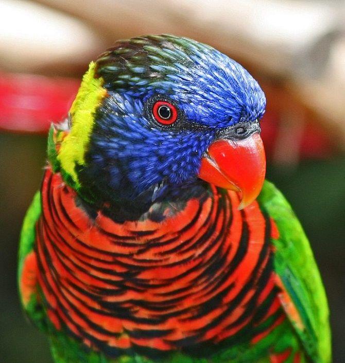 10 самых красивых птиц планеты 8