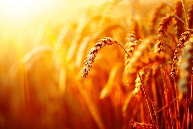 Цвета 2021: эксперты назвали главные оттенки лета и грядущего сезона 3