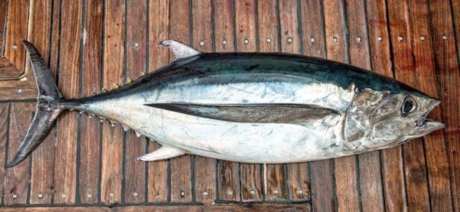 10 видів риби, яку краще не їсти 1