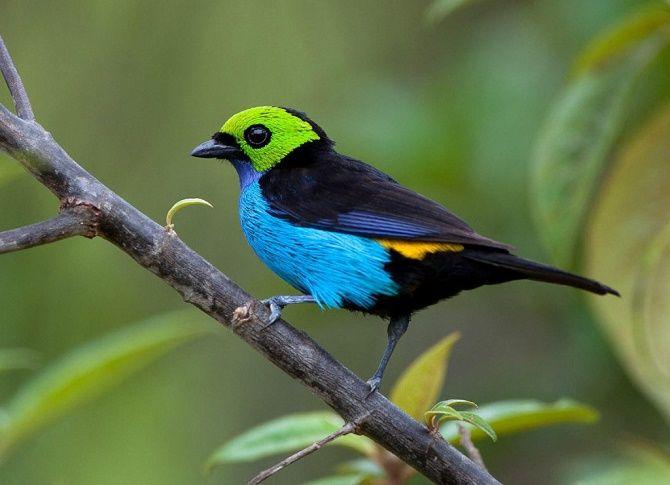 10 самых красивых птиц планеты 4