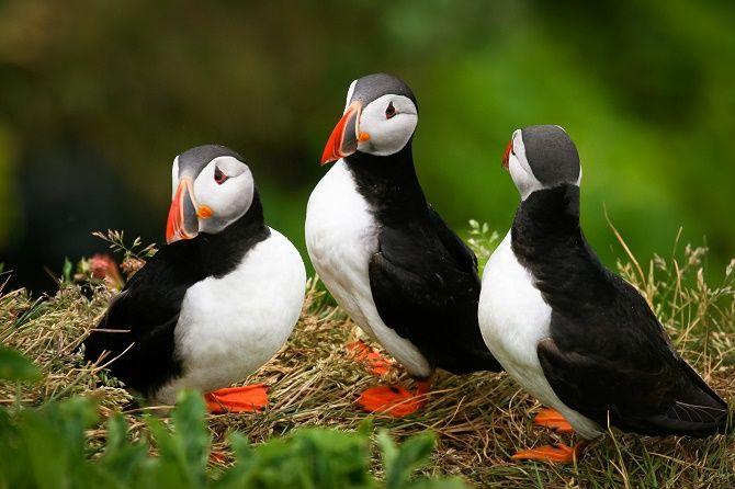 10 самых красивых птиц планеты 7