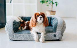 Harley and Cho: лучшие аксессуары и мебель для собак и кошек