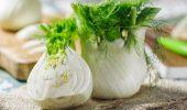 Фенхель – что это за овощ и зачем его едят осенью