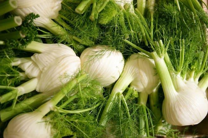 Фенхель – что это за овощ и зачем его едят осенью 2